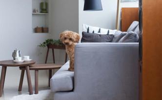 danish-grey-fabric-sofa